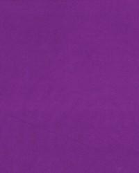 Debonair African Violet by