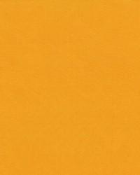 Debonair Cantaloupe by