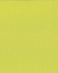 Debonair Celery by