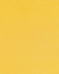 Debonair Daffodil by