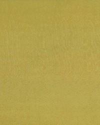 Debonair Lemon Thyme by