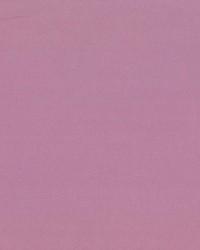 Debonair Lilac by