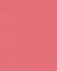 Kimberly Begonia Pink by