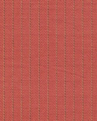 Pinstripe Poppy by