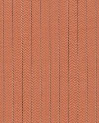 Pinstripe Pumpkin by