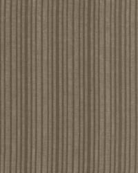 Shy Stripe Grey by