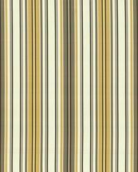 Windsor Stripe Amber by