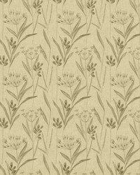 Dandy Park Flax by