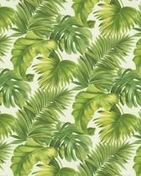 Keanu Palm 110 Green by