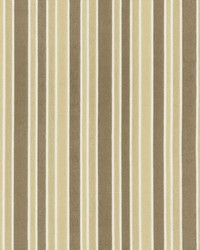Supple Stripe Champagne by