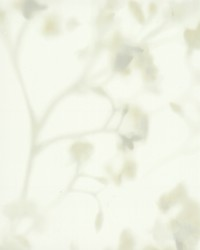 Bliss Wallpaper White Off Whites by