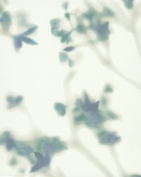 Bliss Wallpaper Blues by