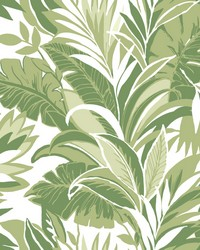 Palm Silhouette Wallpaper Green by