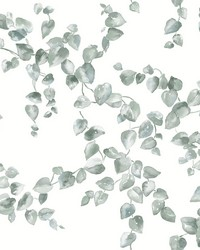 Creeping Fig Vine Wallpaper Sage by