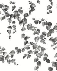 Creeping Fig Vine Wallpaper Black White by