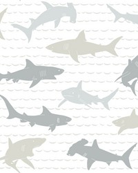 Shark Charades Wallpaper Neutral by