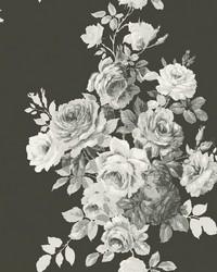 Tea Rose  Black White on Black by