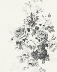Tea Rose  Black White on White by