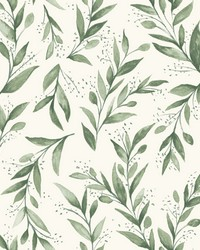Olive Branch  Olive Grove by