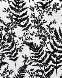 Forest Fern  Black by