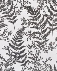 Forest Fern  Grey by