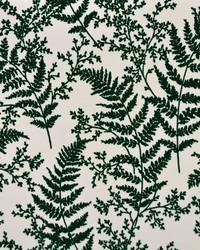 Forest Fern  Dark Green by