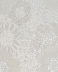 Anemones Wallpaper  White Off Whites by