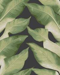 Beverly Hills Wallpaper Black Green by