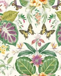 Tropical Butterflies Wallpaper Orange Hotpink by