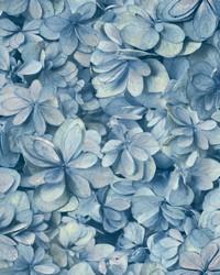 Hydrangea Bloom Wallpaper Blue by