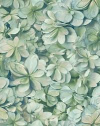 Hydrangea Bloom Wallpaper Green Sky by
