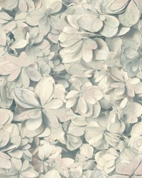 Hydrangea Bloom Wallpaper Grey Pink by