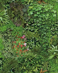 Living Wall Wallpaper Green by