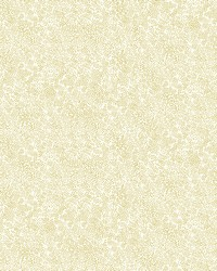 Champagne Dots Wallpaper Gold White by