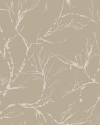 White Pine Wallpaper - Light Brown Browns by