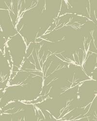 White Pine Wallpaper - Green Greens by