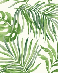 Paradise Palm Wallpaper Green by