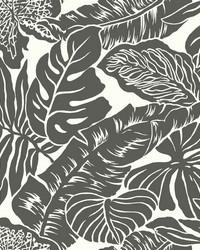 Valdivian Wallpaper  Blacks by