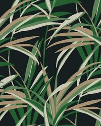 Tropical Paradise Wallpaper Green Black by
