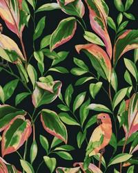 Tropical Love Birds Wallpaper Black by