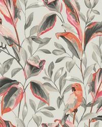 Tropical Love Birds Wallpaper Gray by