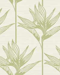 Bird Of Paradise Wallpaper Green by