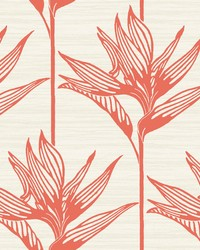 Bird Of Paradise Wallpaper Coral by