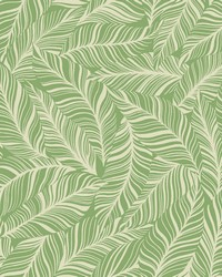 Rainforest Canopy Wallpaper Green by