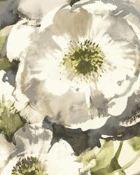 Watercolor Poppy 20 Neutral Wallpaper WT4501 by