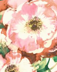Watercolor Poppy 6 Blush Wallpaper WT4504 by