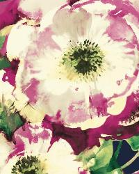 Watercolor Poppy 1 Navy Raspberry Wallpaper WT4505 by