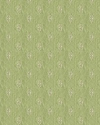 White Pine 33914 123 Spring by