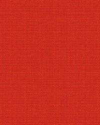 Beekman 34188 19 Tulip by