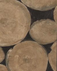 Lumberjack Beech by